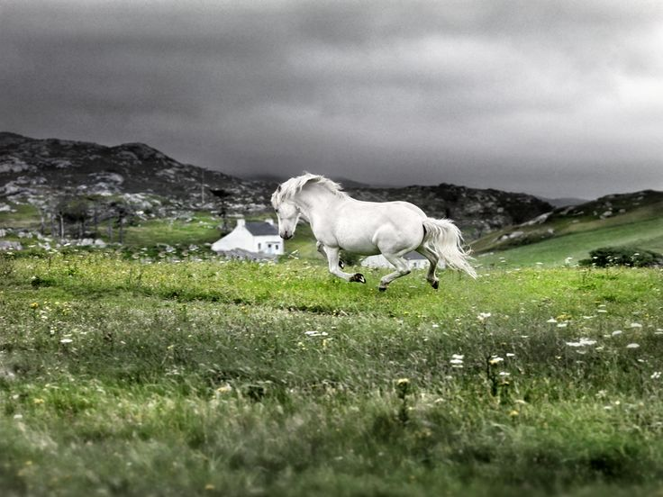 """""""Forever Young!""""   (Photographed at Luskentyre, Isle of Harris, Outer Hebrides, Scotland. By: Ian Lawson.)"""