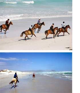 Horseback riding, riding horse on the beach, Cape Town, South Africa