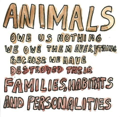 animal deserves rights What is meant by animal rights every conscious being has interests that should be respected no being who is conscious of being alive should be devalued to thinghood, dominated, used as a resource or a commodity.