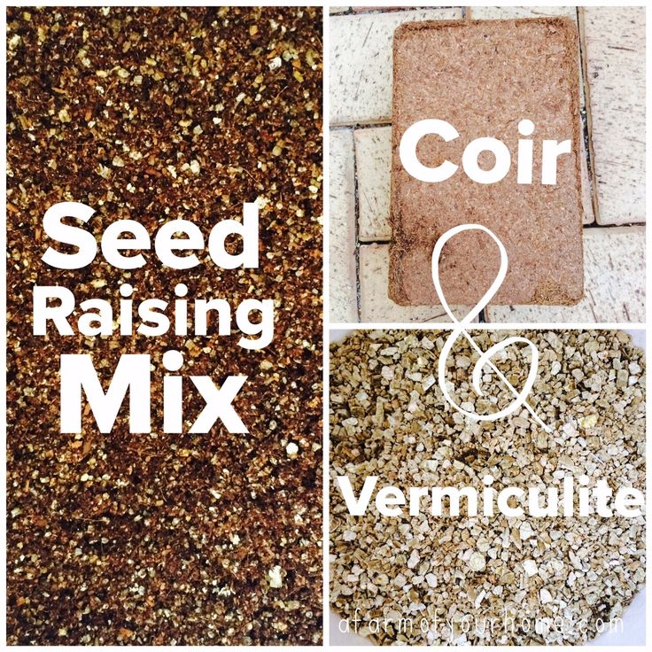 2 ingredient best ever seed raising mix - DIY. To enrich it further, add worm castings and/or compost