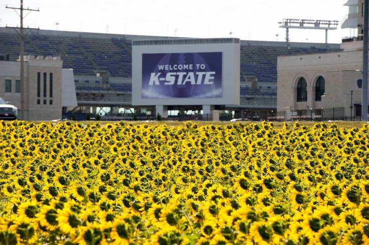 "Nothing screams ""Sunflower State"" quite like this picture by Bill Snyder Family Stadium!"