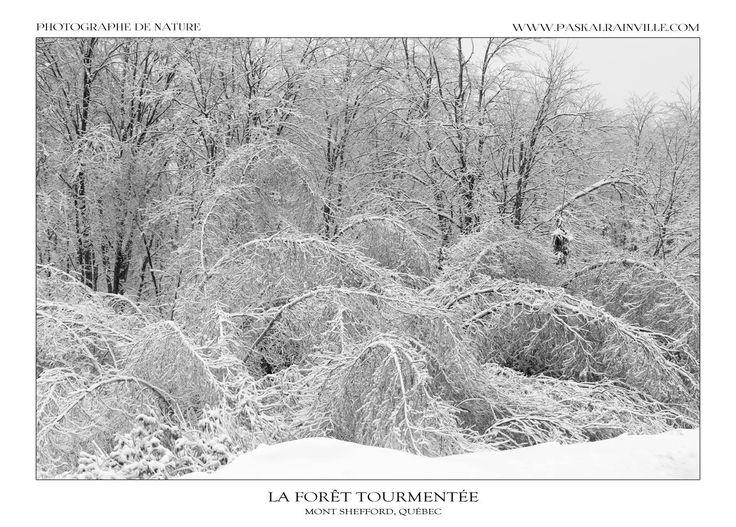 Hiver en désolation Une tempête de verglas avait fait rage la nuit précédente, ce qui a donné ce paysage un peu étrange, un peu lourd mais si magnifique dans toute sa désolation! Prise au mont Shefford, Québec, Canada http://www.paskalrainville.com