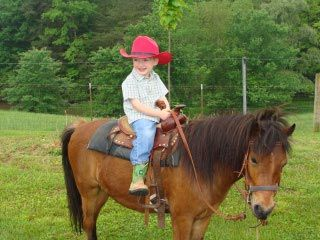 Welcome to Hillcrest Orchards! Located in Ellijay, GeorgiaBerries Pick, Kids Sites Videos Out, Apples Orchards, Fall Fun, Animal Riding, Atlanta Food, 2014 2015 Schools, Fields Trips, Fall Activies