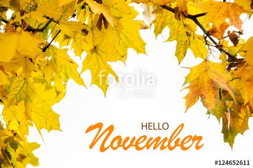 """Download the royalty-free photo """"Hello November wallpaper with autumn leaves frame isolated on white"""" created by stillforstyle at the lowest price on Fotolia.com. Browse our cheap image bank online to find the perfect stock photo for your marketing projects!"""