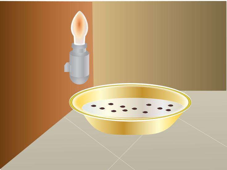 How to Get Rid of Fleas Naturally -- via wikiHow.com