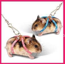 Resultado de imagem para roupa para hamster
