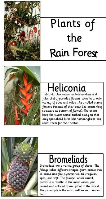 Mother Load of Rain Forest - Amazon info. and free