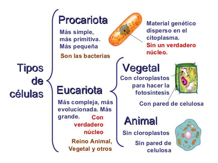 29 best Educación images on Pinterest | Cell biology, School and Science