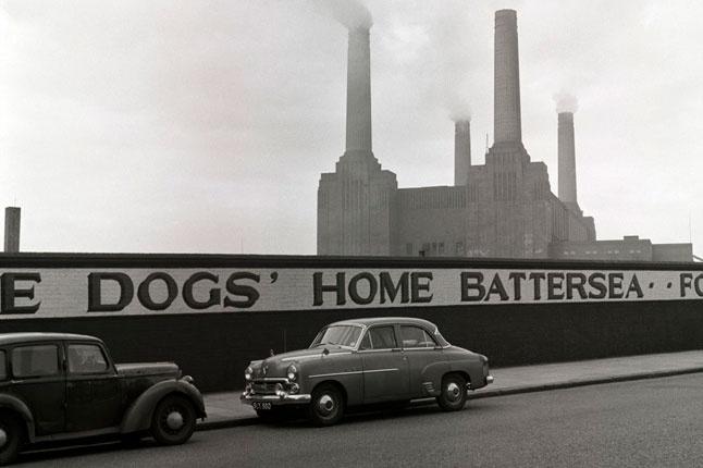 Battersea, Battersea Dogs Home
