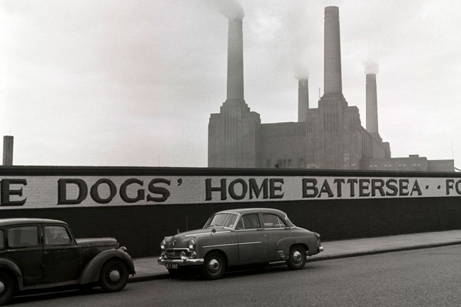 Battersea, Battersea Dogs Home
