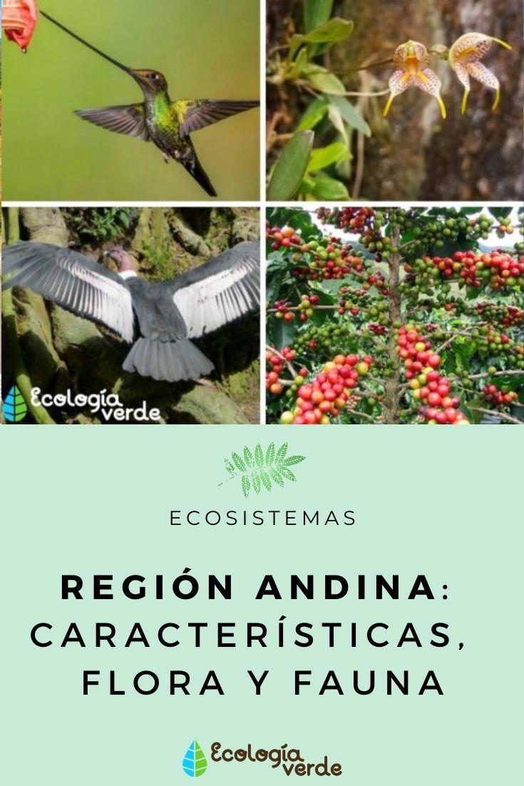 Región Andina Características Flora Y Fauna Tipos De Ecosistemas Ecosistemas Fauna