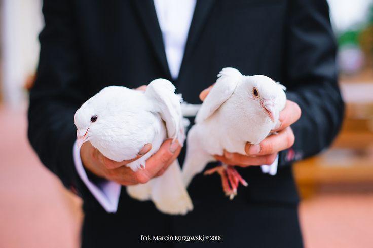 gołębie na szczęście #wedding
