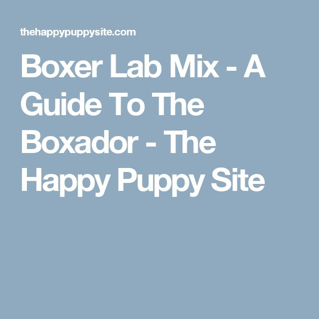 Boxer Lab Mix - A Guide To The Boxador - The Happy Puppy Site
