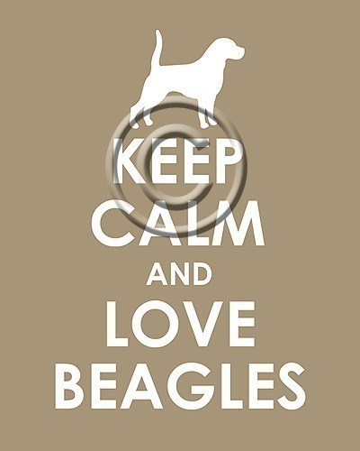 keep calm and love beagles, the lobster pot (etsy); $11.99