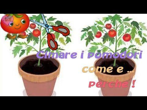CIMATURA PIANTE DI POMODORO, COME E PERCHE' - YouTube