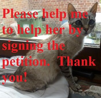 Puppy mill practices: please help me to help the cat from our street and sign the petition: https://www.change.org/p/the-animal-welfare-service-from-belgium-save-pippie-from-puppy-mill-practices  Thank you very much and please share also with friends and ask them too to sign and share. ...  petition , pippie , cat , kitten , puppy mill , help , help pippie , save pippie , animal , animal wellfare