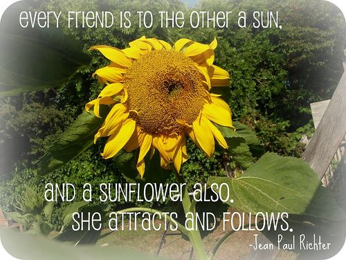 Sunflower Quote – Best Quotes Collection