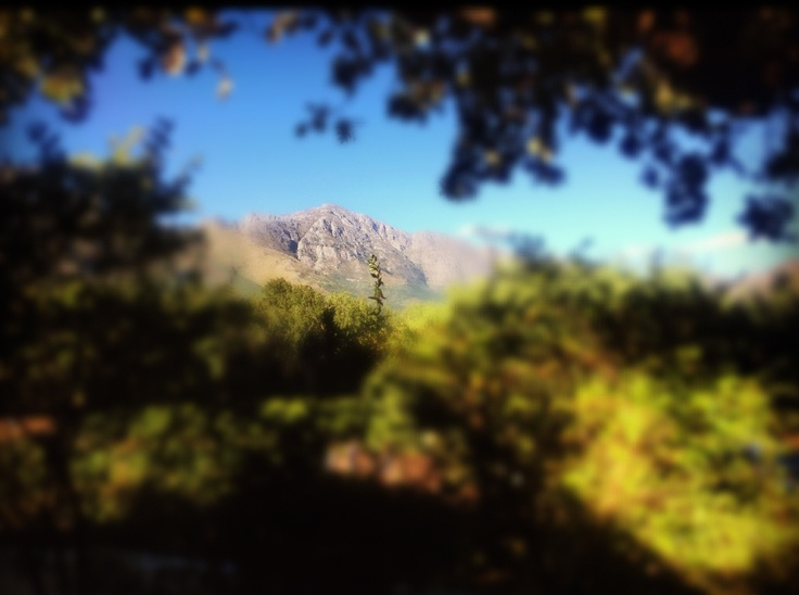 View from a winery in Stellenbosch, South Africa