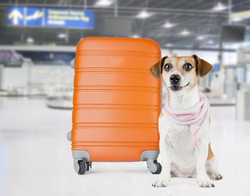 10 Dog Friendly Hotels Motels