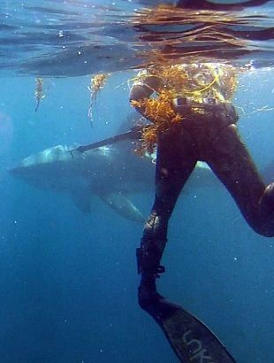 Worth keeping an eye out for  video of close encounter with a great white  on Ch 7 and  thewest.com.au   later   Pictures: Nathan Podmore