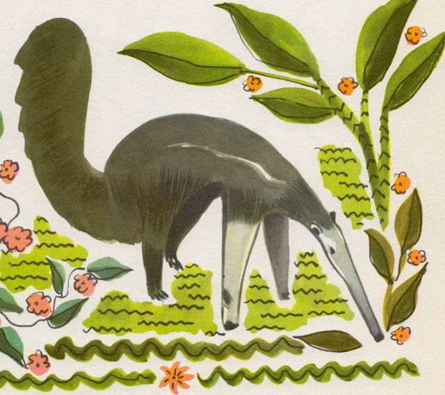 The True Book of Jungles by Illa Podendorf, illustrated by Katherine Grace – anteater