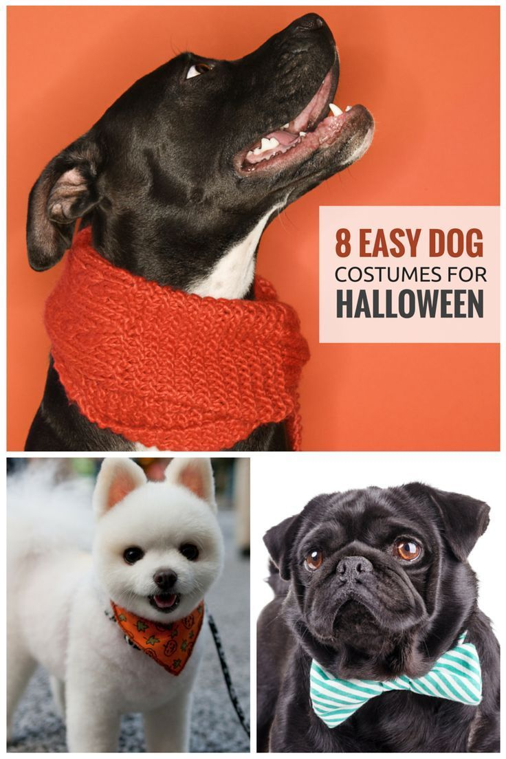 8 Easy Ways To Dress Your Dog For Halloween Big Dog Costumes