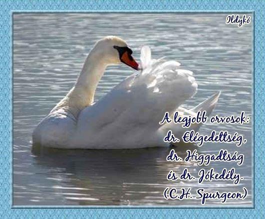Minél többet osztozol...,Tudod ha engem...,Bocsáss meg...,A legjobb orvosok...,Egy pillanatnyi igazság...,Bízzatok az új utakban...,Figyeld meg...,Sosem oldhatjuk meg...,Ha valaki nem lehet...,Ne engedd..., - 1vargaildyko Blogja - # A Nap Képe!,# A Természet Csodái,# Állatvilág képekben,# Ámulatba Ejtő Fotók :))),# Angyalkáim, Tündéreim!,# Angyalok-Tündérek,# Csodálatos Mandalák,# Érdekes-szép képek vegyesen,# Gyönyörű Tájképek :),# Ídézetes, verses képek,# Indiánok élete képekben,#…