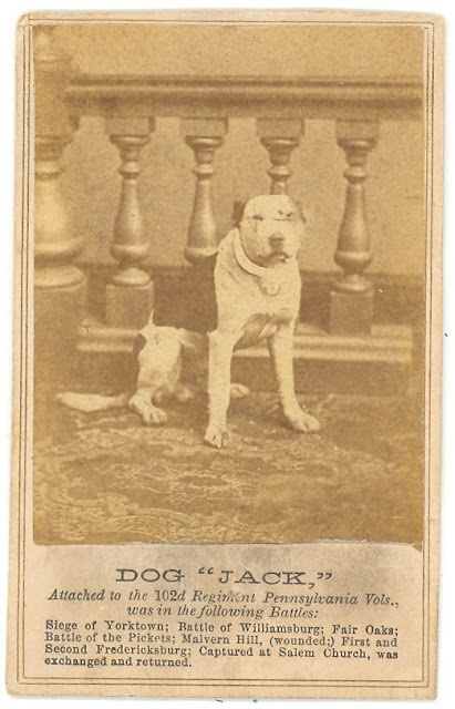 "CDV of dog ""Jack,"" attached to the 102nd Regiment Pennsylvania Vols, and was in the following Battles: Siege of Yorktown, Battle of Williamsburg, Fair Oaks, Battle of the Pickets, Malvern Hill (wounded), First and Second Fredericksburg, captured at Salem Church and exchanged in return for two Confederate prisoners."