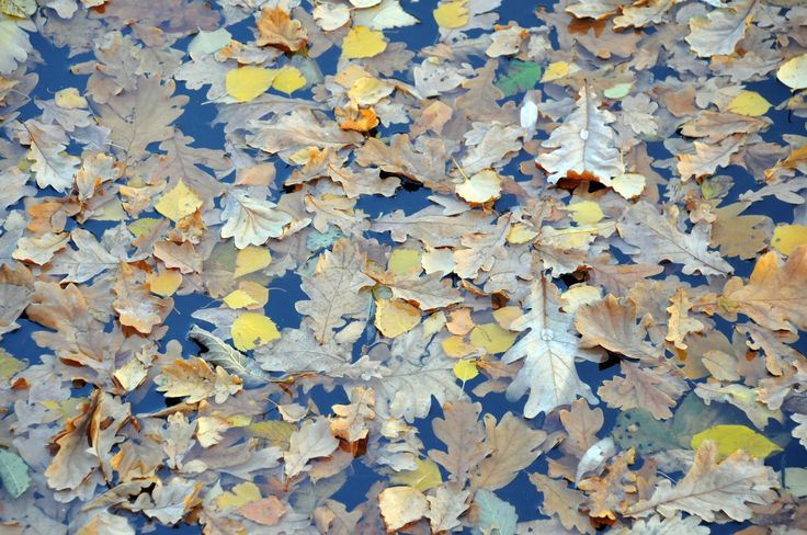 Water in the fall.