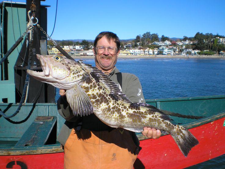 72 best rockfish and lingcod images on pinterest for Santa cruz fishing