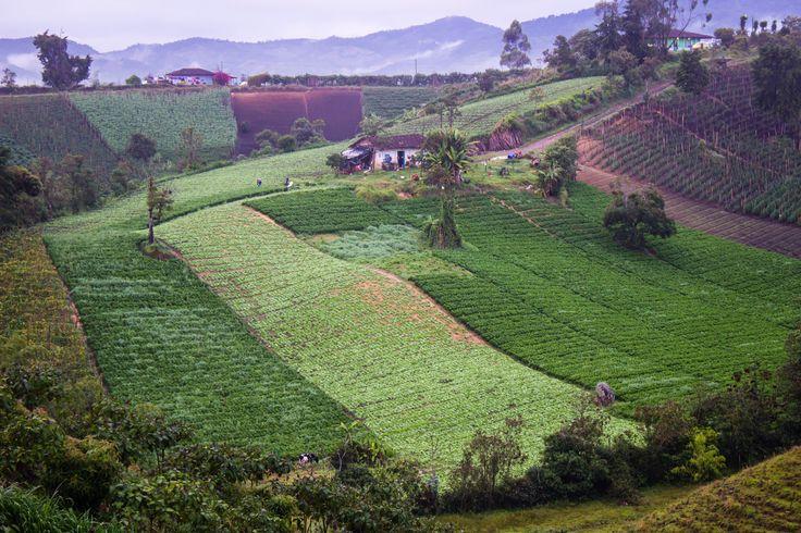 Casas de humildes campesinos, con sus sembrados de hortalizas. Guarne, Antioquia.