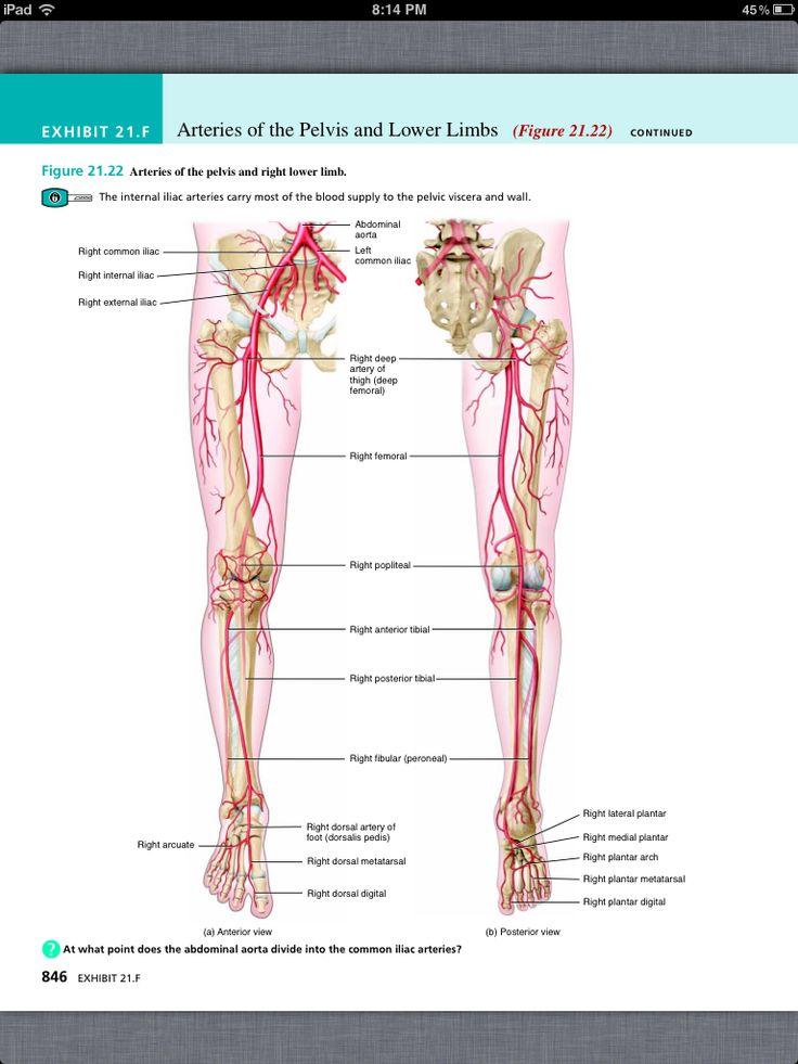 Ausgezeichnet Principles Of Anatomy And Physiology By Tortora ...
