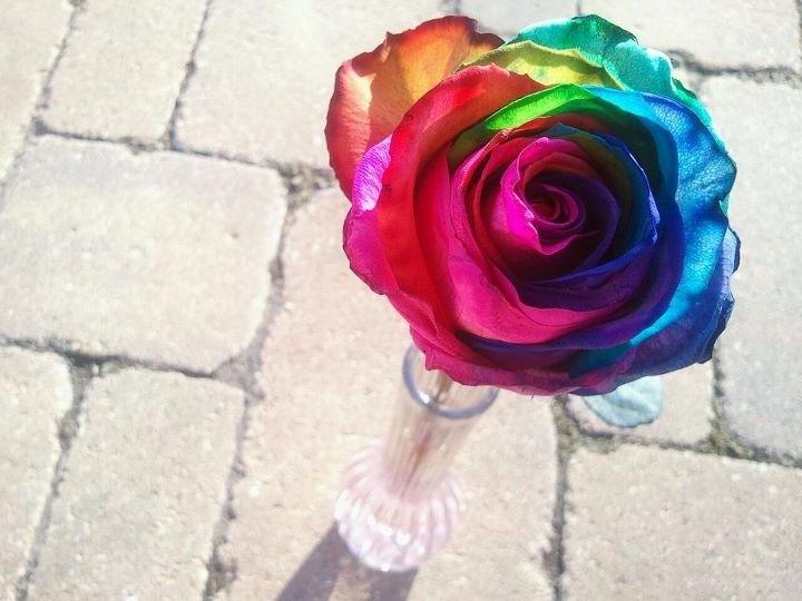 62 best smell the roses images on pinterest black roses