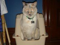Get Rid of Cat Urine | GETRIDOFTHINGS.com