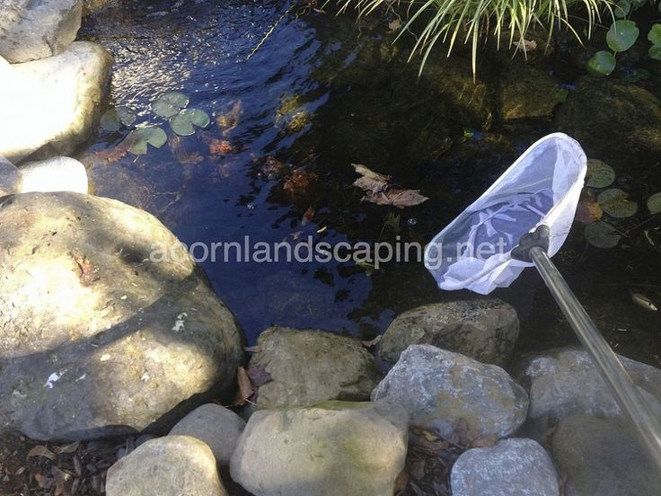 25 Best Ideas About Pond Maintenance On Pinterest Garden Ponds Pond Cleaning And Koi Ponds
