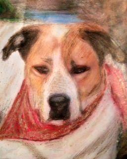 Pastel I did of my Dog Pablo
