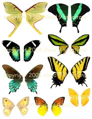 yellow green butterflies