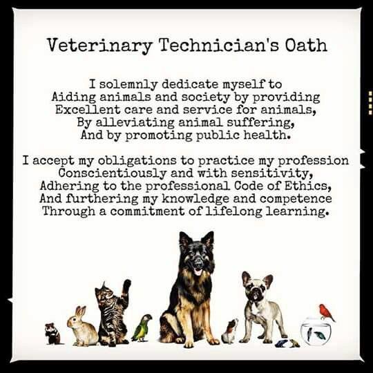 Best Vet Tech Images On   Veterinary Medicine