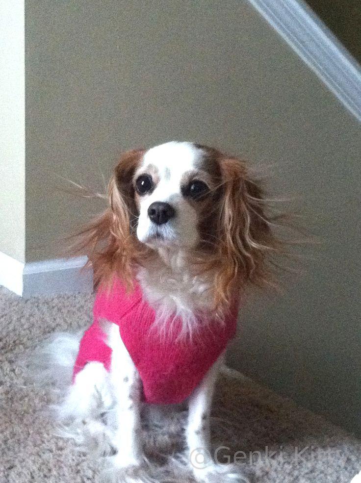 Static Pup