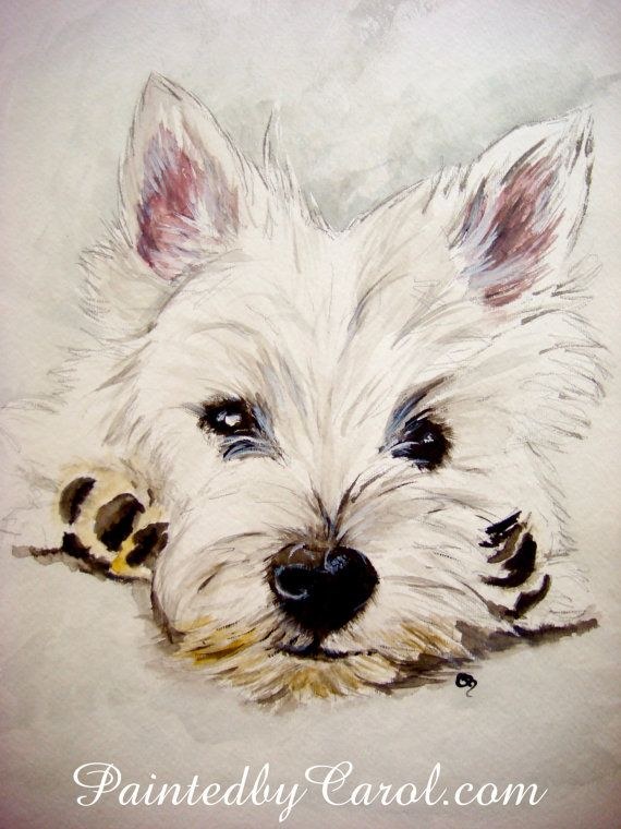 388 Best Westies Images On Pinterest