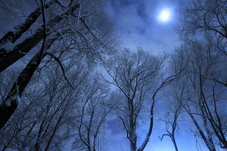 Alberi audaci e rigidi nella falce di luna, fatevi da parte allo scricchiolare di tacchi d'oro sotto di voi. (Emily Holmes Coleman, Il manto di neve, trad. Piero Pozzi, Robin Ed., 2008)