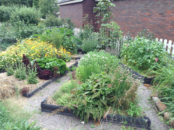 Our potager with raised beds, early in August