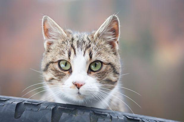 Can Cats Heal Broken Bones