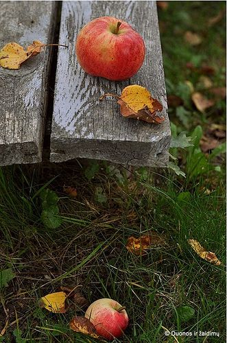 Apple on a park bench
