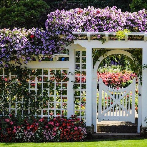 Oltre 25 fantastiche idee su recinzioni da giardino su - Recinti da giardino ...