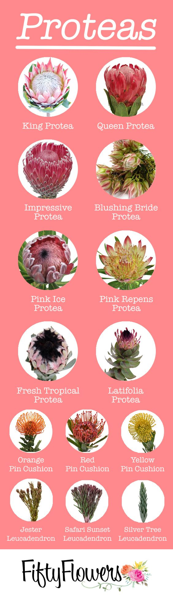 Check out our Protea selection!