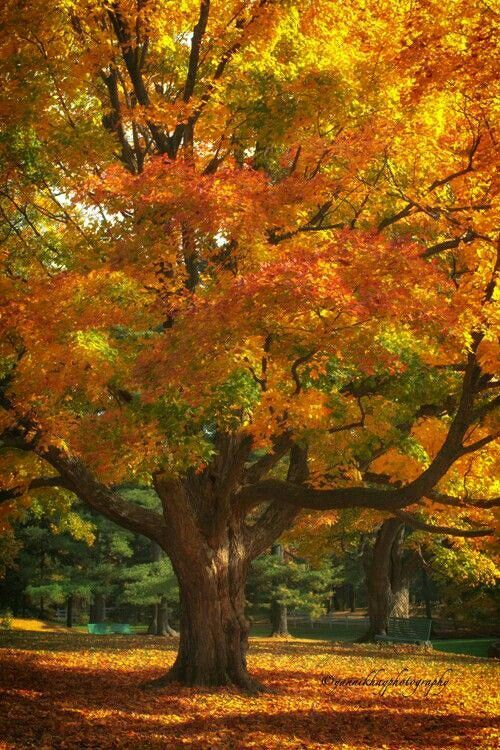 """""""Fall has always been my favorite season. The time when everything bursts with its last beauty, as if nature had been saving up all year for the grand finale."""" Lauren DeStefano"""