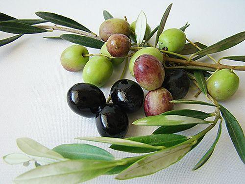 У нас оливки покупают на рынке. Идешь себе вдоль целого ряда тазов — и пробуешь. Зеленые, черные. Соленые, маринованные в вине. Вяленые — острые и без перца. Эти я люблю больше всех — у них интенсивный вкус оливкового масла, легкая пикантная горчинка. Пока выберешь, так напробуешься, что уже можно и не обедать. Оливки полезны, но — калорийны! Однако, если нет возможности вот так попробовать, и вы купили оливки в красивой железной баночке… а внутри оказалось совсем не то, что на картинке, не…