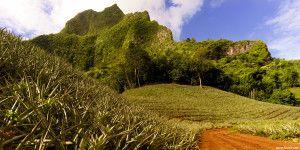 Pineapple Farm, Moorea – French Polynesia