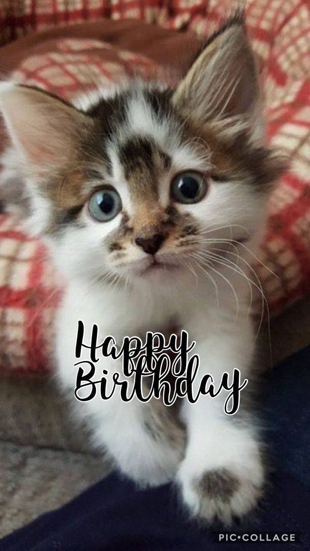 Happy Birthday With Images Happy Birthday Cat Happy Birthday